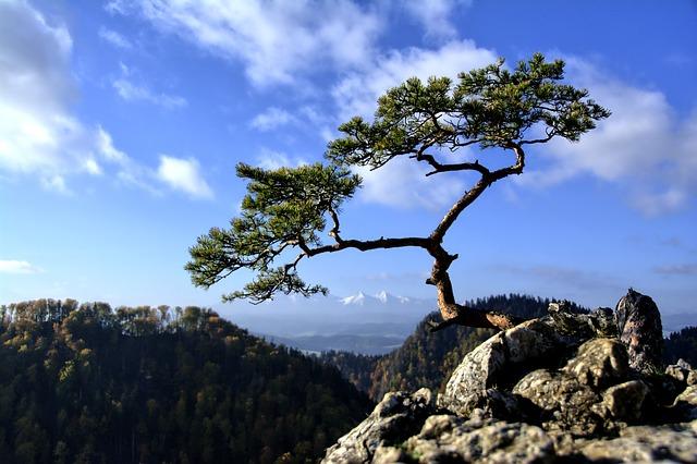 Anna Roth_mountain